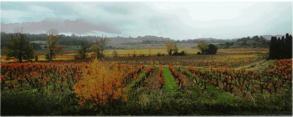 Vu d automne de la plaine des basses Corbières avec les oranges et rouges des vignes et des arbres