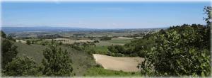 Paysage de champs cultivés structuré par des alignements d arbres