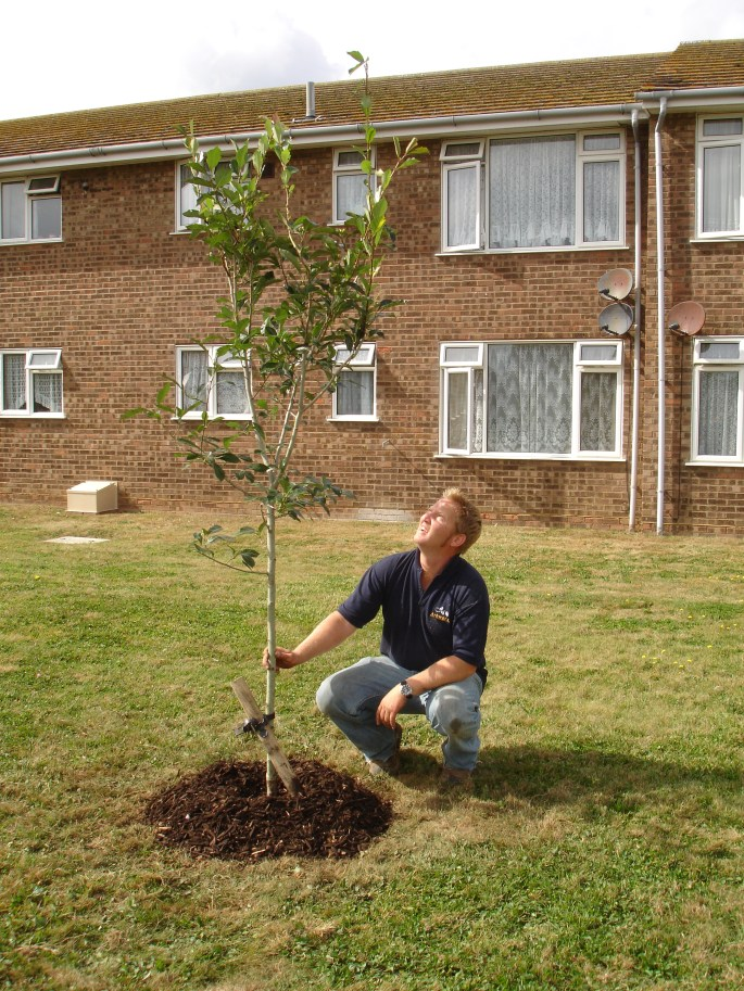 Planting trees is a very rewarding job, and is a good way to offset your carbon footprint.
