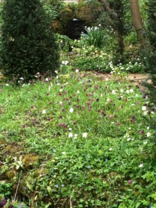 Vann, water garden, fritillaries