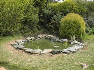 green water in your pond can damage any plants although it will not harm fish