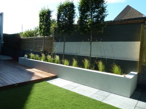 Pleached hornbeams set in rendered planters