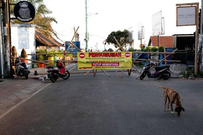 Un perro pase por las calles de Indonesia