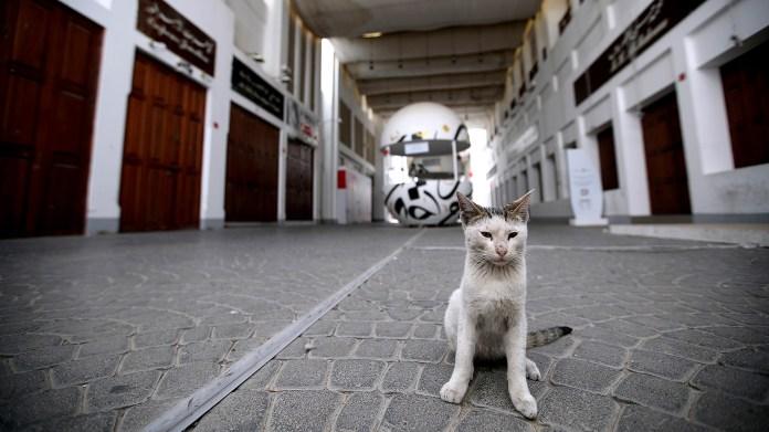 Un gato callejero en Baréin