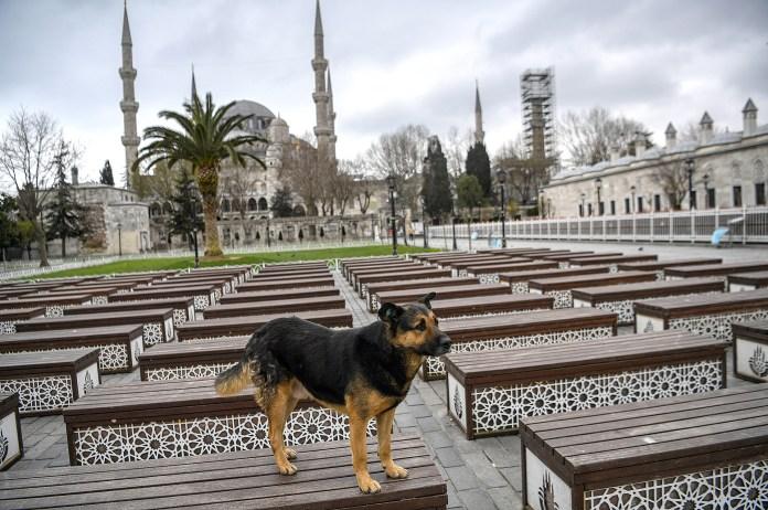 Un perro paseando en Turquía