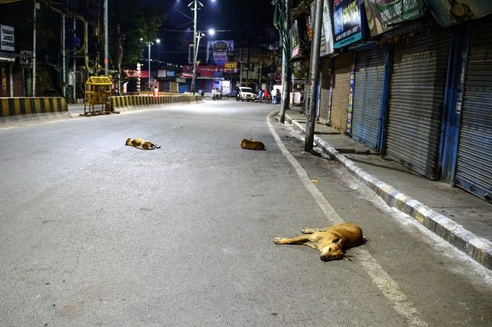 Los perros eligieron las calles, vacías por la cuarentena, para descansar en la India