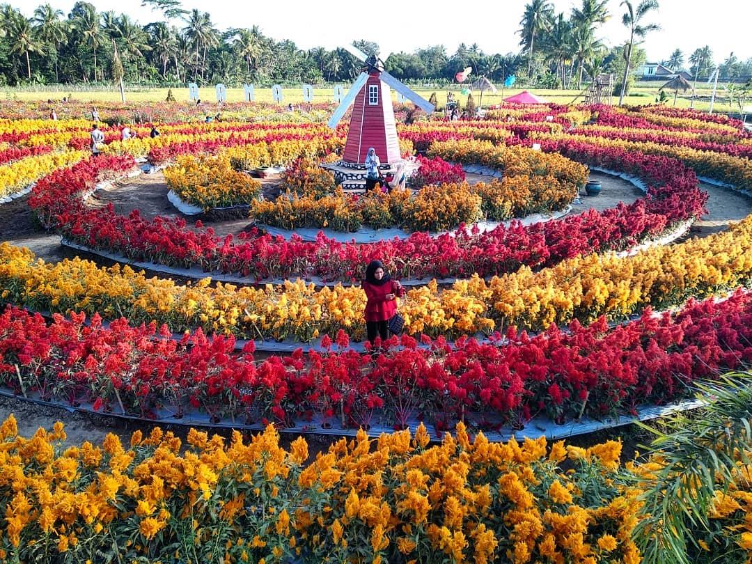 64 Kumpulan Desain Taman Celosia Paling Terkenal