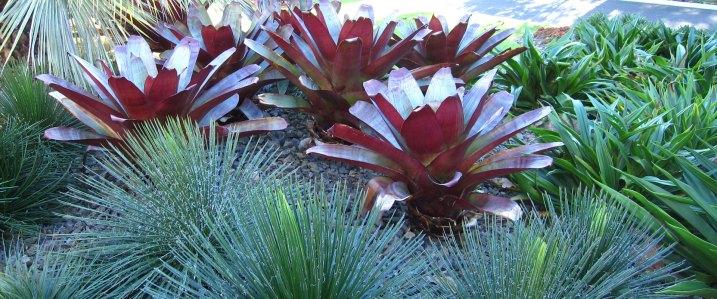 Royal Botanic Gardens Melbourne Volcano Garden
