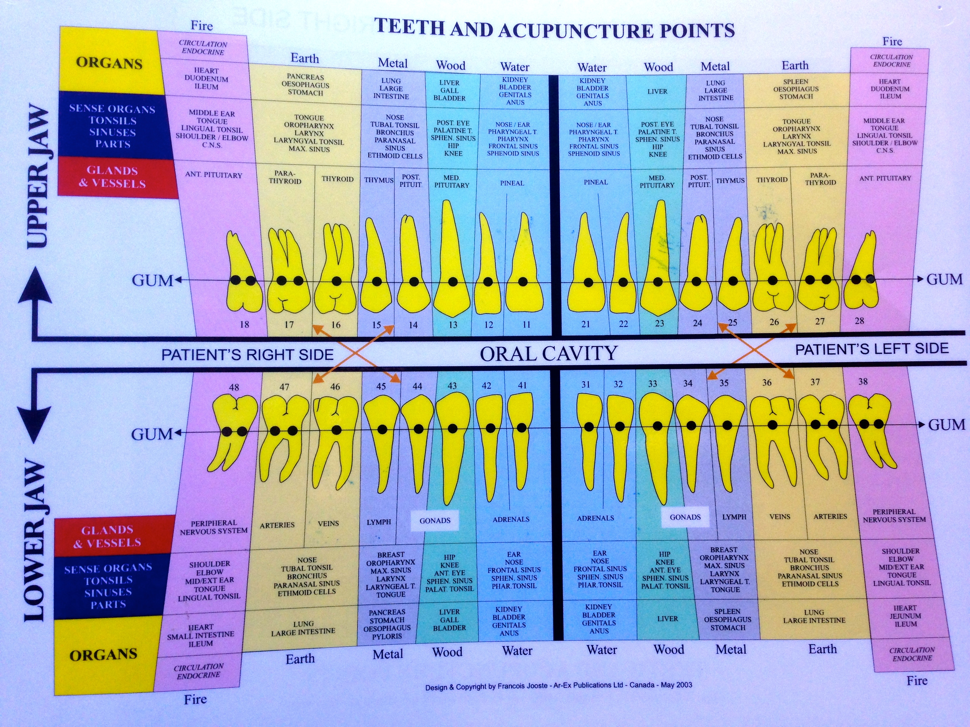 Meridian Tooth Chinese Chart