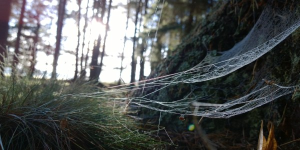 Dew covered spiderwebs in November