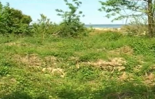 The ruins of the Late Antiquity fortress near Bulgaria's Shkorpilovtsi have been covered with grass and trees. Photo: TV grab from BNT2