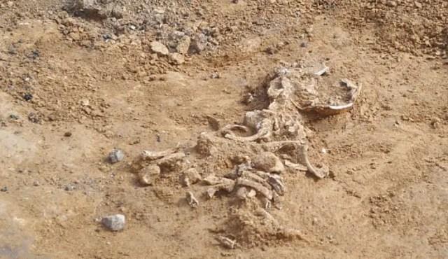 One of the four graves found in the Chalcolithic necropolis in Bulgaria's Kamenovo. Photo: Darik Razgrad