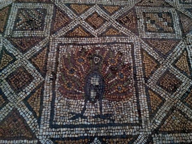 This peacock image is one of the numerous strikingly beautiful depictions of birds in the Early Christian mosaics which are being unearthed and restored at the Great Basilica in Bulgaria's Plovdiv. Photo: Plovdiv24