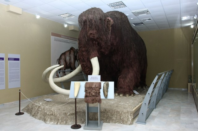 A life-size statue of a woolly mammoth in the Museum of Natural History in Ruse. Photos: Ruse Regional Museum of History