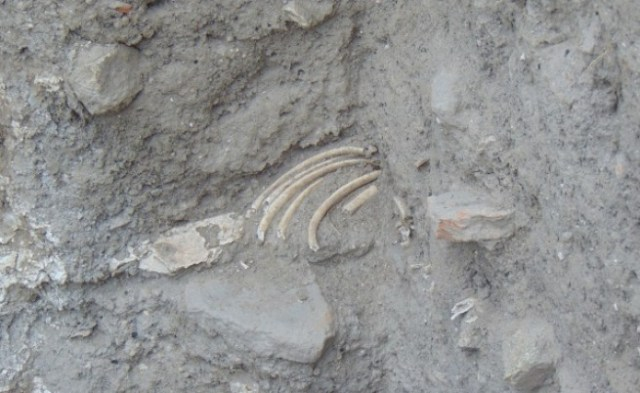 Human remains from the newly exposed medieval necropolis near the cistern of the Nebet Tepe Fortress in Plovdiv. Photo: BGNES
