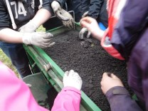 Pupils sieving finds