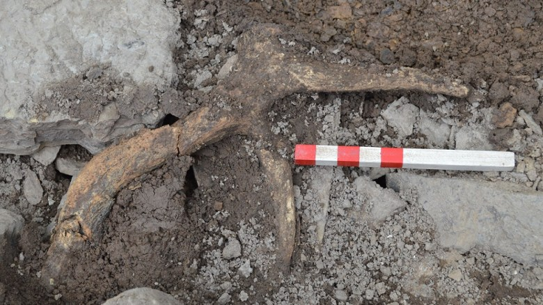 The large deer antler from the revetment rubble in the SW extension