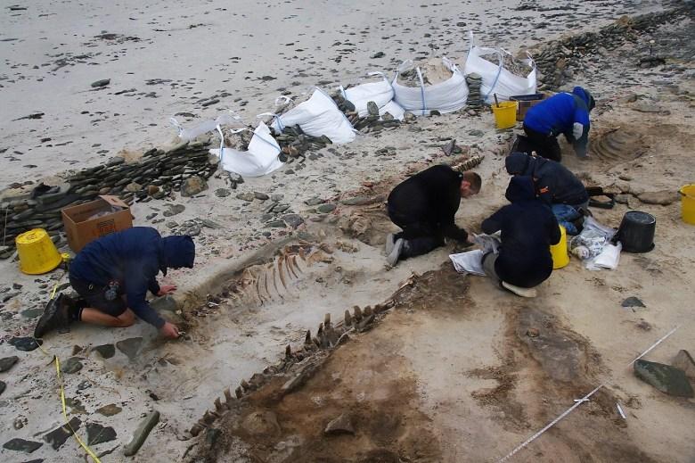 excavating whales cata sand