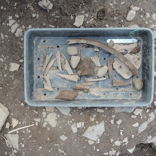 One of many trays of animal bone from site