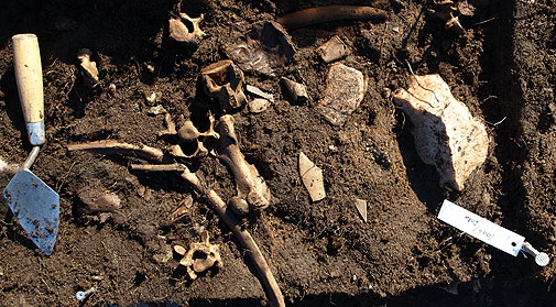 Zooarchaeology - the study of animal remains in an archaeological context.