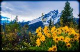 Jenny Lake Flower