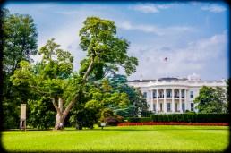 White House 4