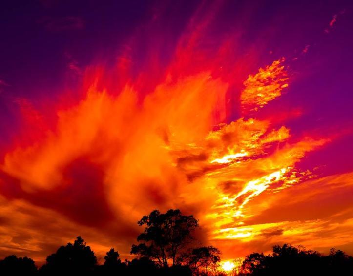 the_phoenix_s_rising_by_nova_mite_d86ylb7-fullview