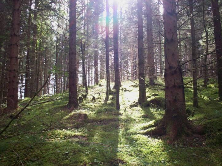 autumn_forest_23_by_the_warlock_king_de524oj-pre