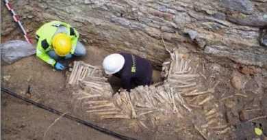 Des murs d'ossements exhumés sous la cathédrale de Gand