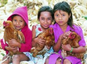 A gift of chickens from Heifer International