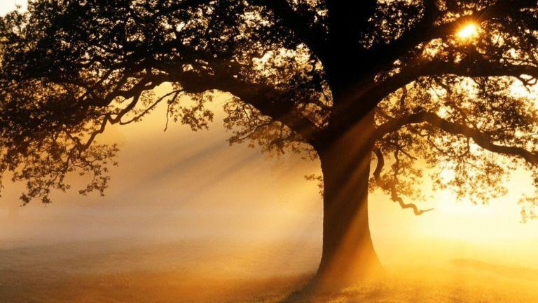 BBC News: Can Trees Cut Air Pollution?