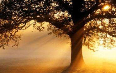 oak_tree_at_sunrise