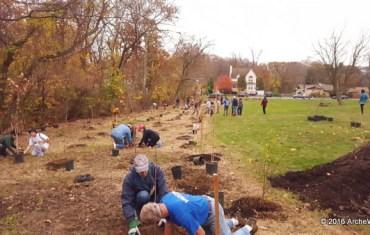 ArcheWild landscape planting with volunteers