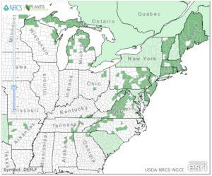 Deschampsia flexuosa var flexuosa USDA range map
