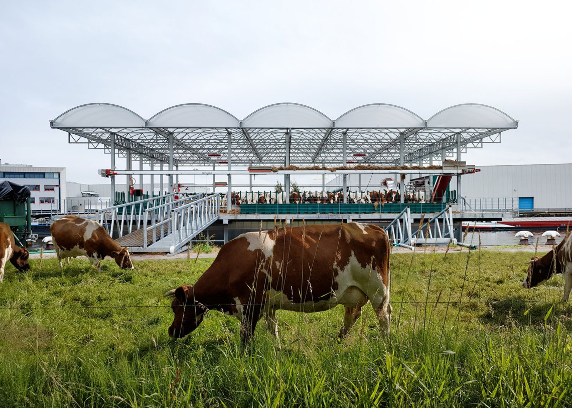 Exterior of floating Farm Dairy in Rotterdam by GOLDSMITH Company. Cows in the city.