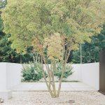 Vegetation patio - Five Patio Houses in Meilen / Think Architecture