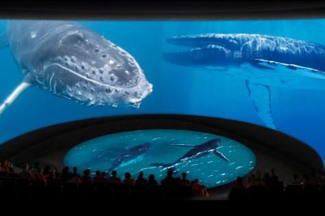 © Aquarium of the Pacific