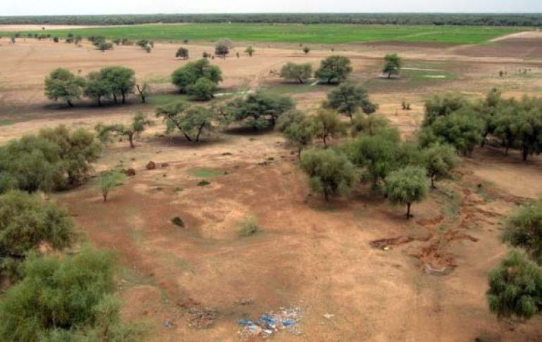 environnement-les-causes-de-la-deforestation-dans-le-nord-du-senegal-2