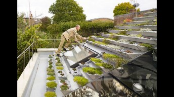 Roof planting