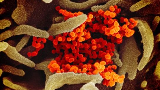 novel-coronavirus-sars-cov-2_49531042907_o