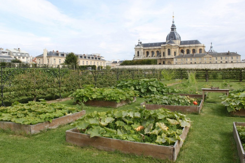 a vegetable garden in the shadow of a very large palace