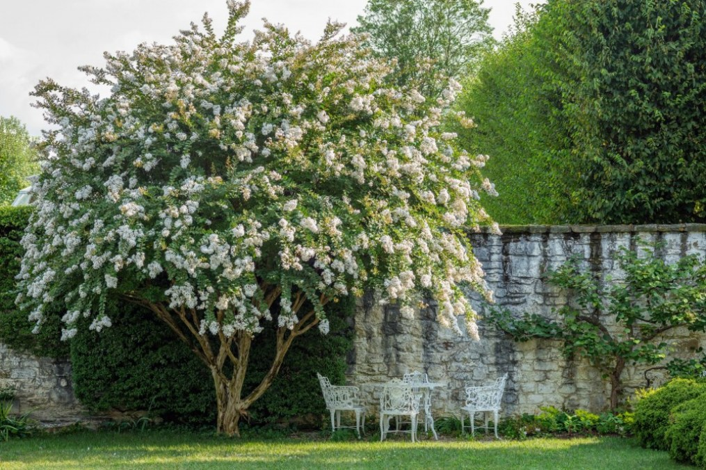 a large blooming tree next to a wall and a white dining set