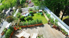 Accent With Planting Media for Make a Beautiful and Attractive Rooftop Garden