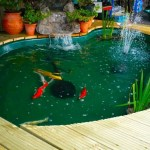 Adding Water Pump In The Fish Pond Minimalist Fish Pond Indoor