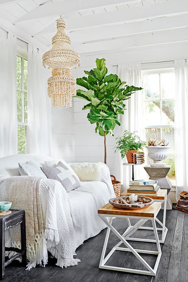 Plants for All-White Style House Design