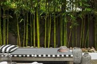 Bamboo for Amazing Garden Decorations