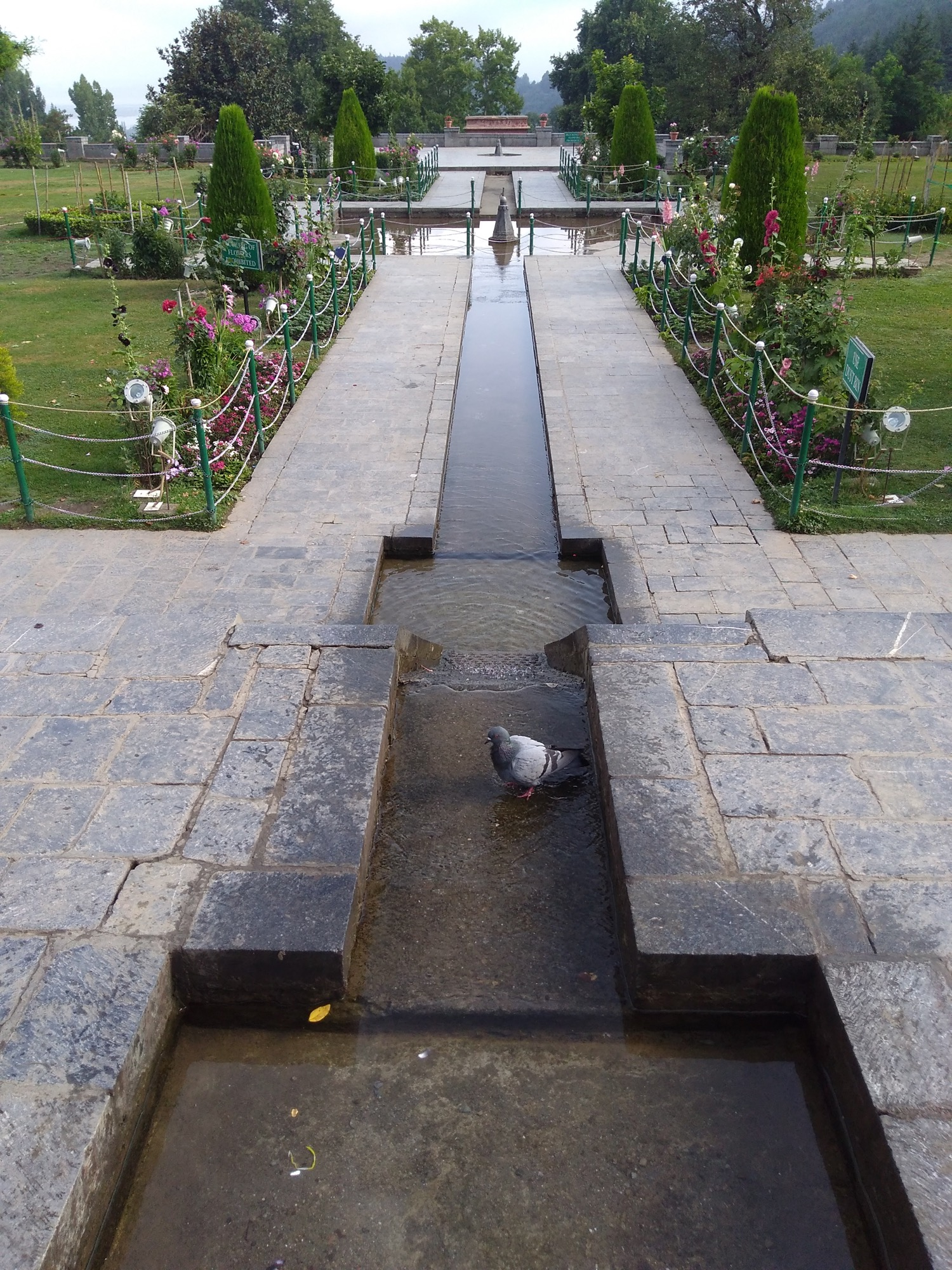 'Don't Pluck Flowers' - Design Dalda brings story from Chashme Shahi Garden, Srinagar 12