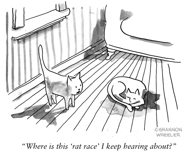 Cat rat race cartoon