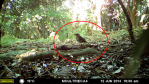 Workshop: Camera Traps: Standardised Applications for an Invaluable Ecological Research Tool