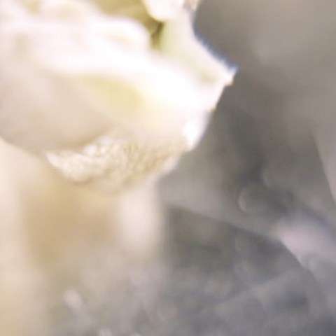 Shari DeLorian / Alice Bachmann – INESSERE (Live at Avantgardening 2020)